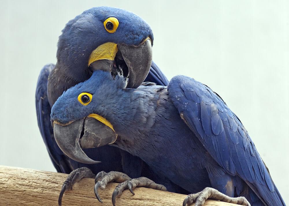 Upoznajte Gabrijela i Fabija – papagaje koji su raznežili svet