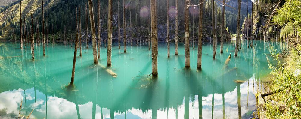 Šuma u kojoj drveće raste naopako!