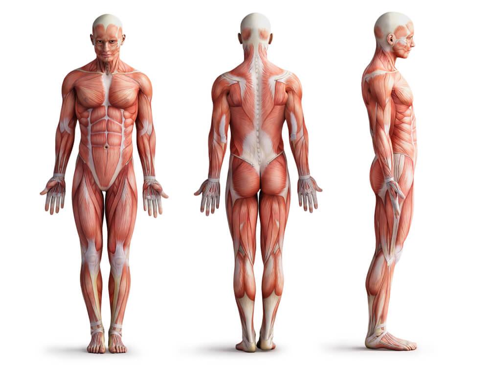 Naučnici otkrili novi organ u ljudskom telu!