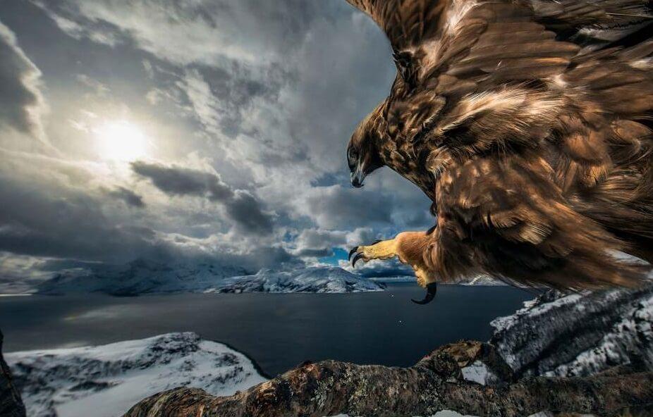 Najbolje fotografije divljih životinja prikazuju neverovatne scene iz prirode