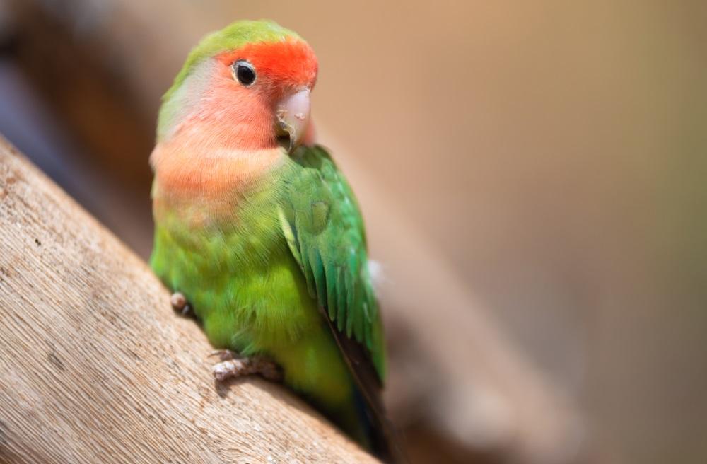 Papagaj završio u zatvoru sa svojim vlasnikom
