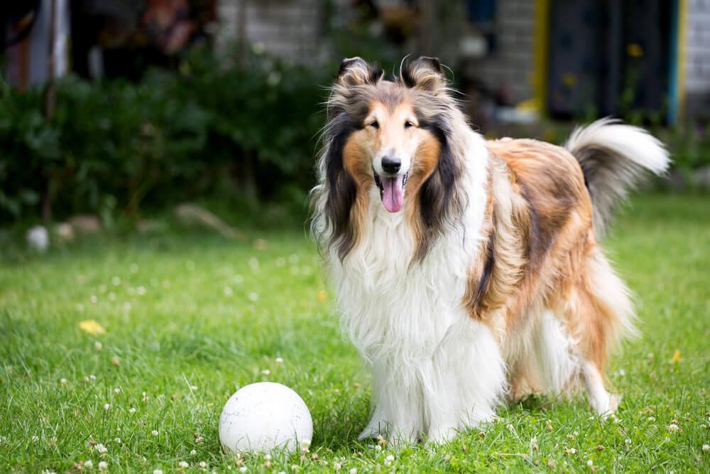 Ako razmišljate da uzmete psa, trebalo bi da znate da su ovo najdruželjubivije rase pasa