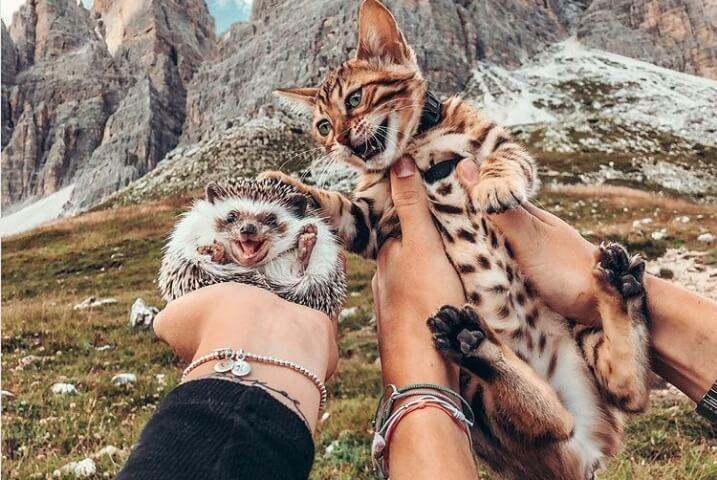 """Bengalska mačka i afrički jež su najslađi """"petfluenseri"""" 🦔🐱"""