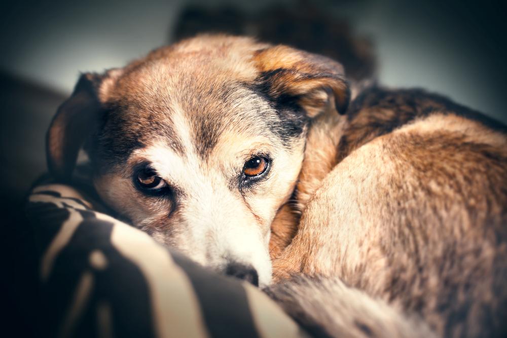 Momak iz Novog Sada pravi kućice za pse lutalice