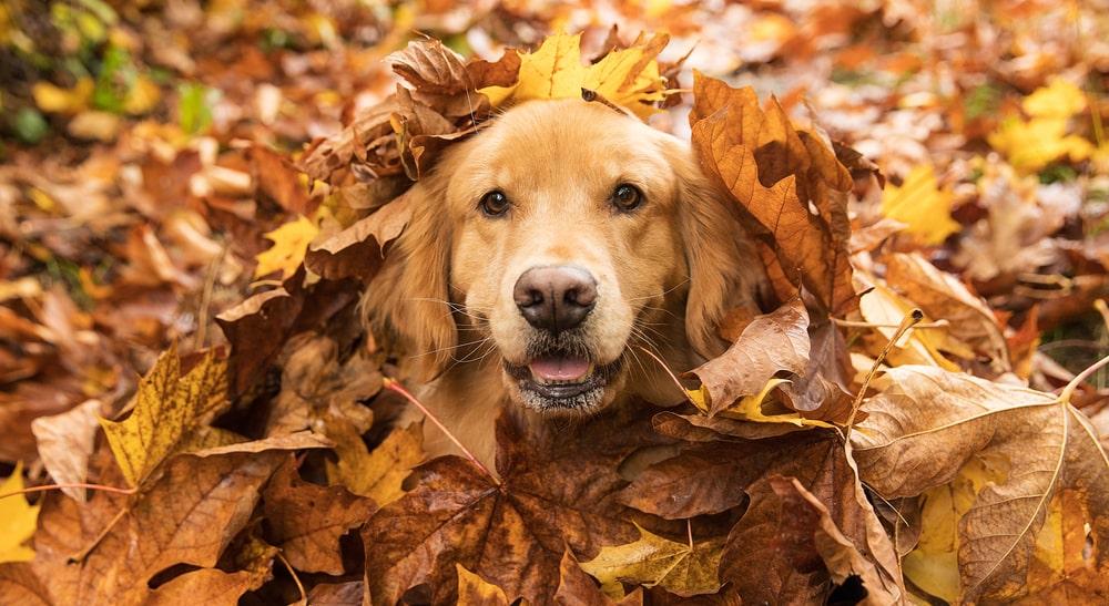 7 najčešćih zabluda o psima