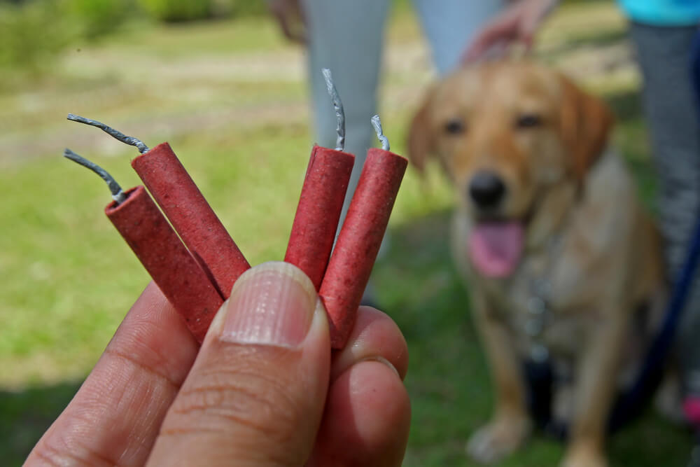 Više od 5.000 pasa i mačaka godišnje ugine zbog petardi