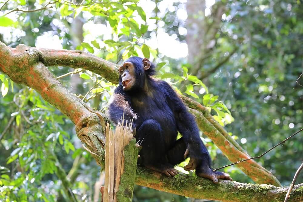 Šimpanza htela da nazdravi sa posetiocima zoo vrta 🐒