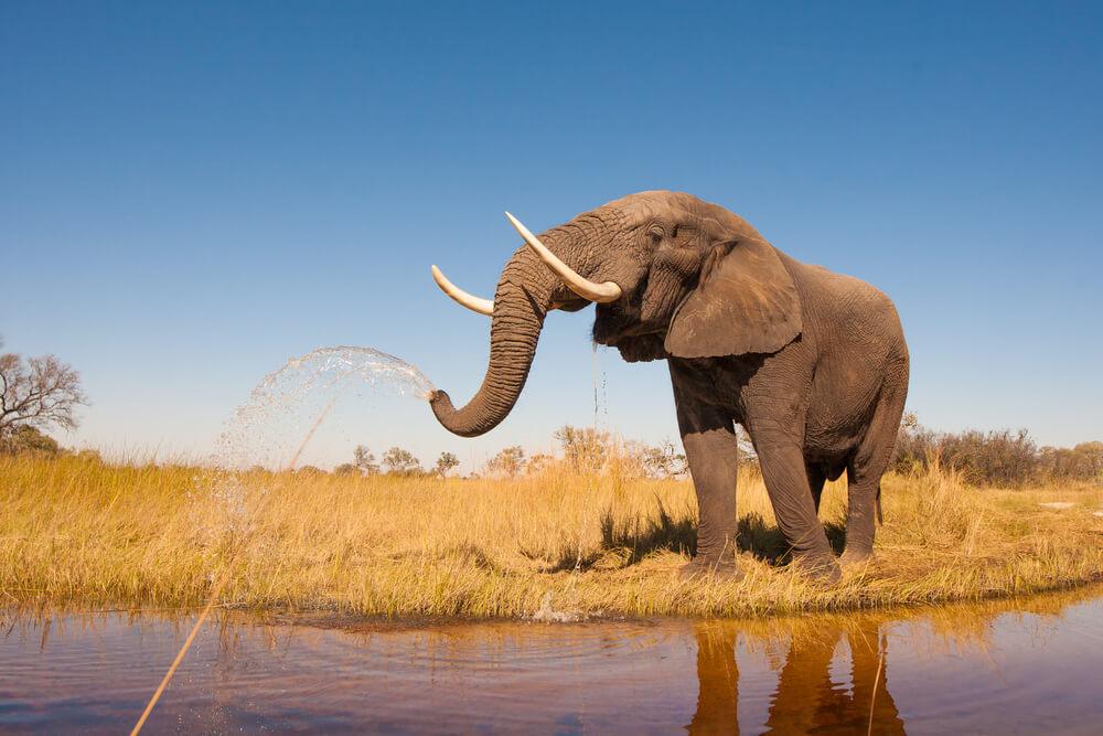 3 životinje koje bi uskoro mogle da nestanu sa Zemlje