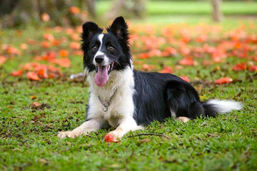 Istraživanje tvrdi – pseća godina ne vredi 7 ljudskih, evo kako izračunati starost