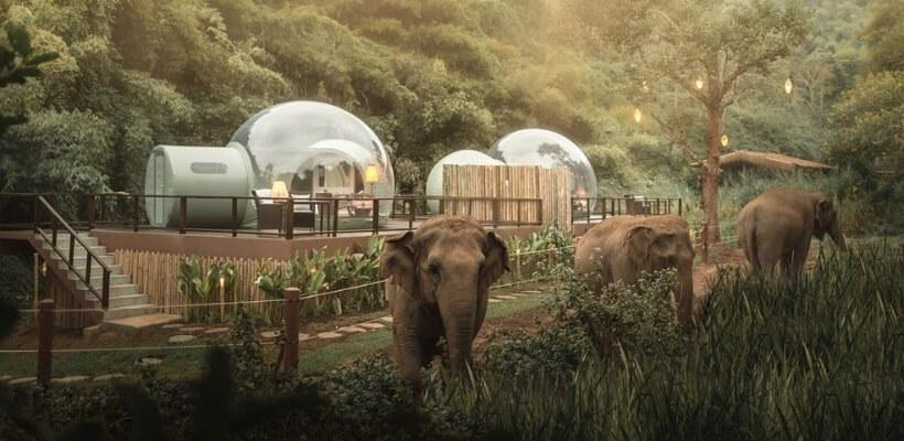 Hotel sa slonovima na Tajlandu je prava atrakcija