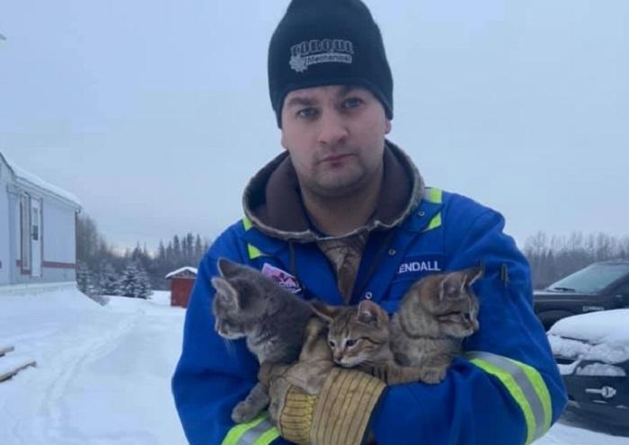 Kanađanin spasio tri mačića od smrzavanja na zanimljiv način