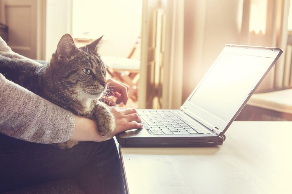Firma u kojoj svako ko udomi mačku dobije 40 evra mesečno