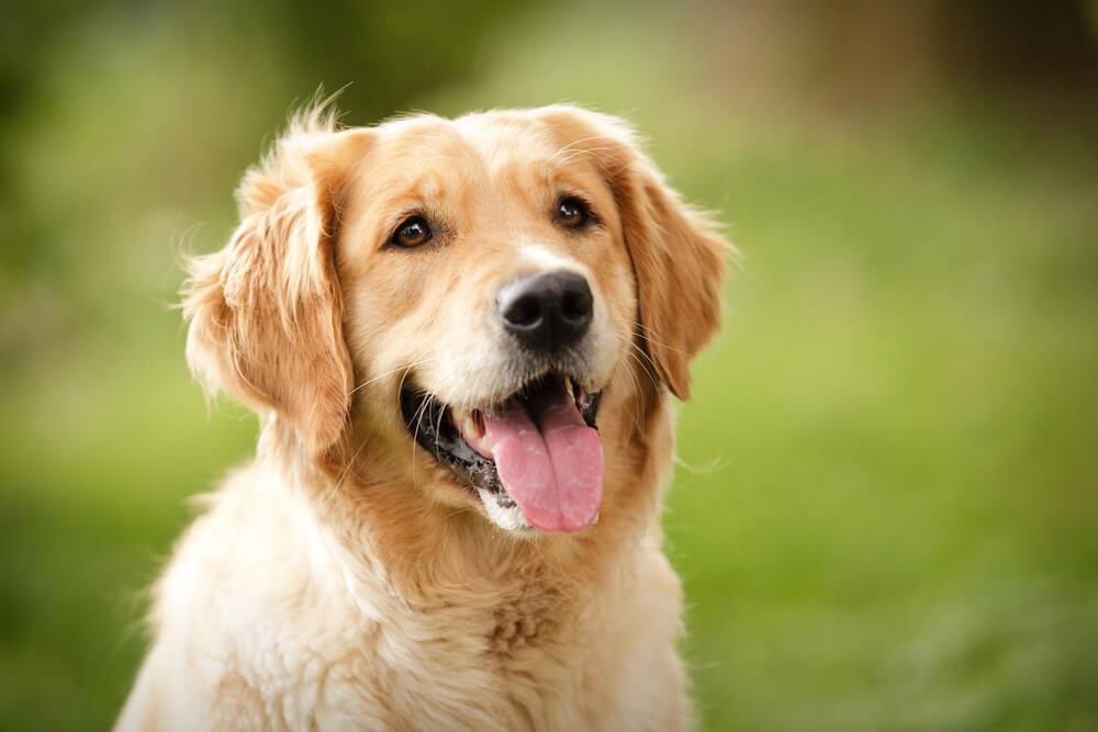 Hrabri pas pobedio bolest – i postao zvezda Super Boula!