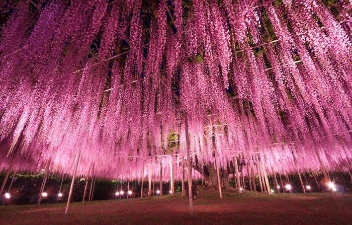 Park cveća u Japanu je pravo umetničko delo