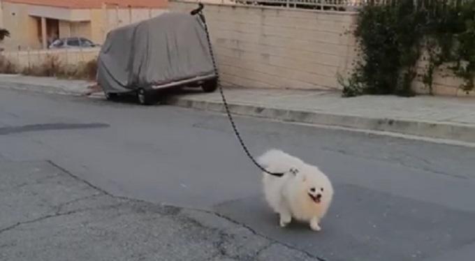 Gospodin sa Kipra na totalno dovitljiv način prošetao psa