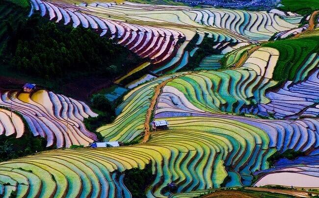 Polja pirinča u Kini su stvar magije