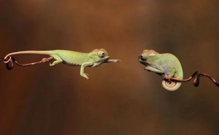 Fotografije životinja koje su svima pokazale da mogu ostvariti nemoguće