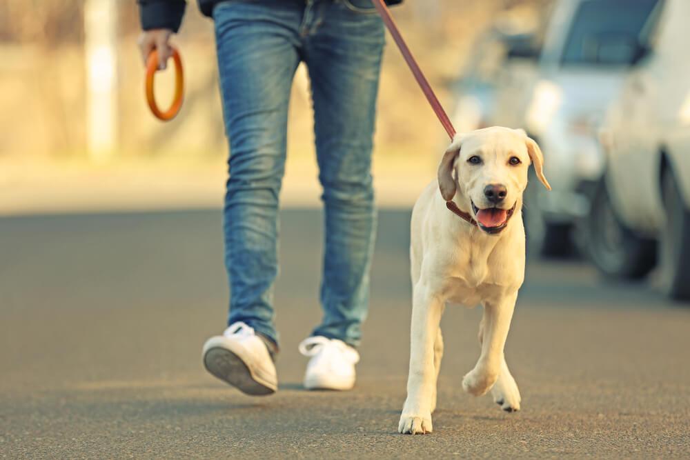 Šta uraditi kada ste u karantinu sa svojim psom i ne možete s njim u šetnju?