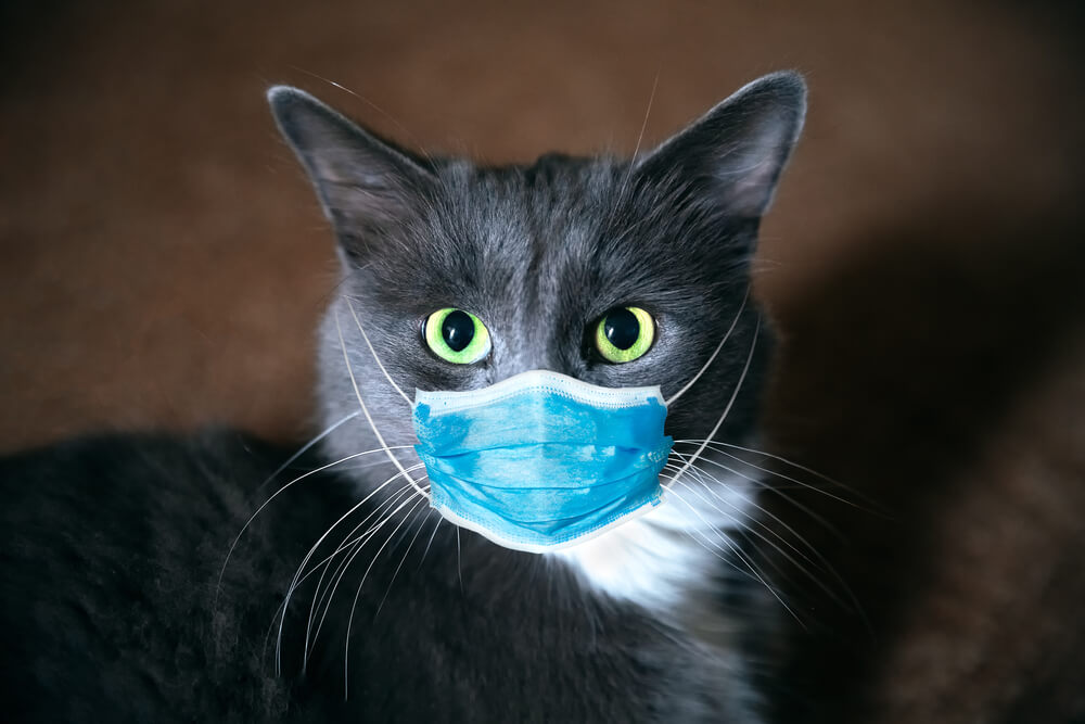 Mačka iz Rusije pozitivna na koronavirus!