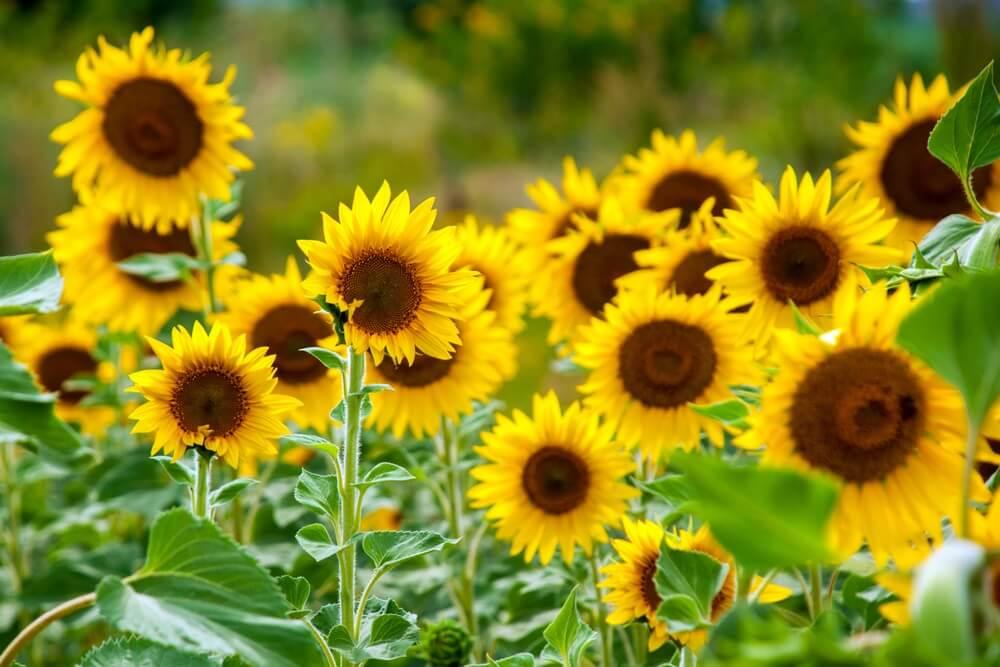 Slovenski horoskop: Otkrijte koji ste cvet i šta to govori o vama