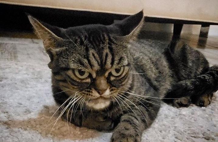 """Ovo je nova """"Grumpy cat"""" – njena namrgođena njuška već je osvojila celi svet"""