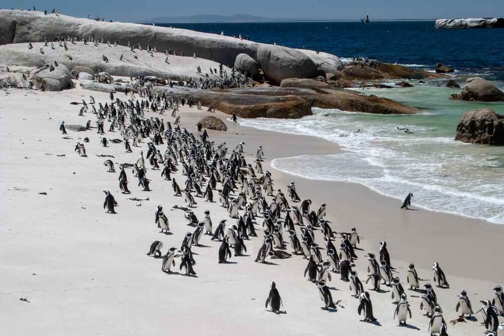 Bolders – predivna plaža koju naseljavaju pingvini