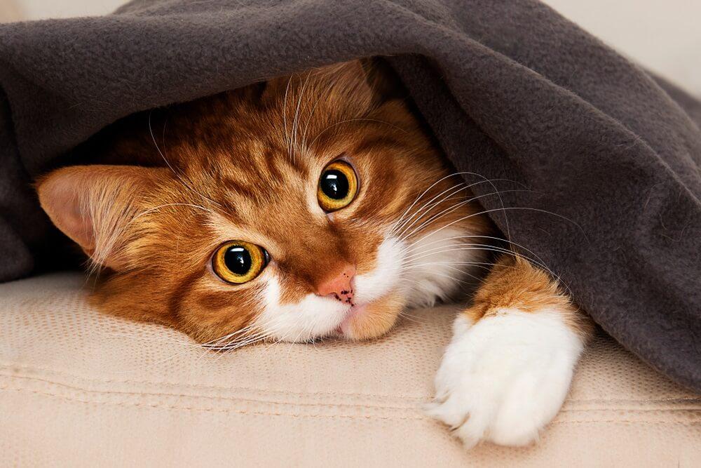 Idealan ljubimac – ova mačka čisti, pere i kuva