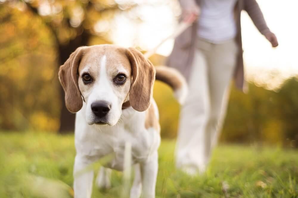 Omiljena rasa pasa otkriva vašu ličnost – koja je vaša omiljena rasa?