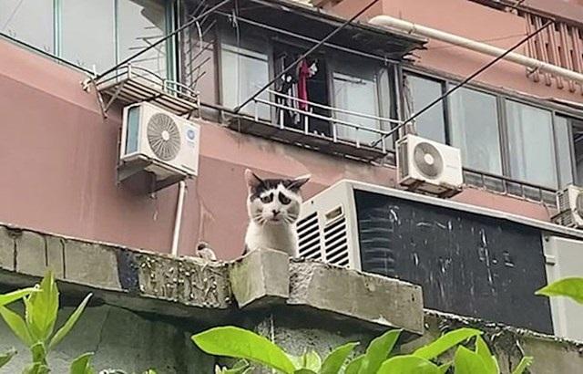 Internet ima novu zvezdu – maca koja zbog šara izgleda kao da je tužna