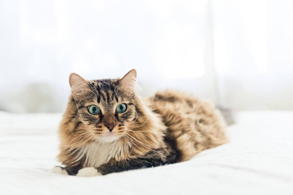 12 stvari koje mačke nikako ne podnose