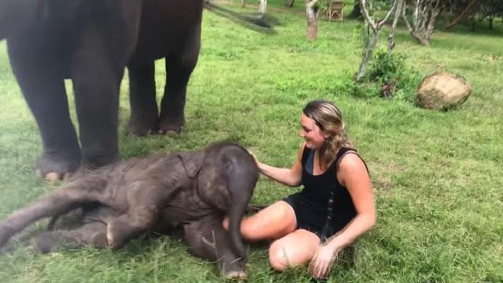 Snimak slonića koji se igra sa turistima je sve što vam je potrebno danas