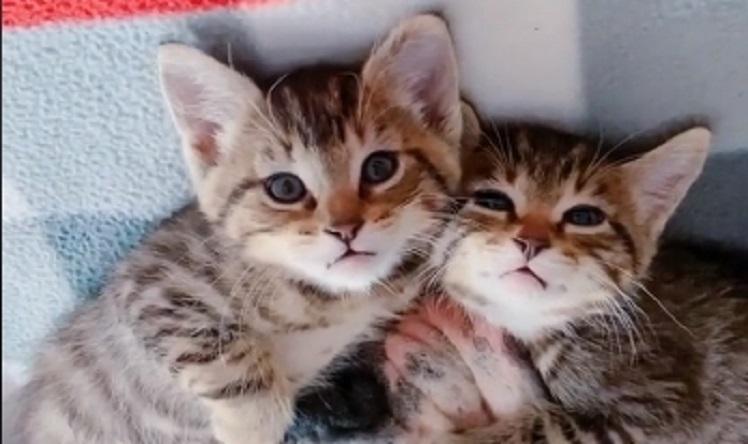 Ovi mačići imaju najbolje dadilje na svetu – rastopićete se