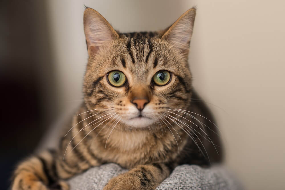 Mačka krade rukavice, vlasnik ih vraća komšijama na simpatičan način