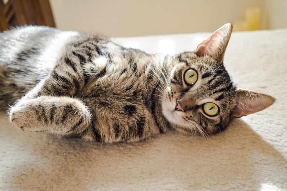Šta znači kada mačka konstantno gleda u vas?