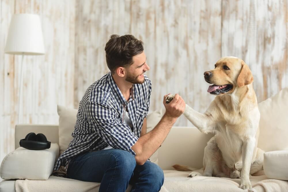 Postoji objašnjenje zašto ste osoba koja voli pse ili mačke