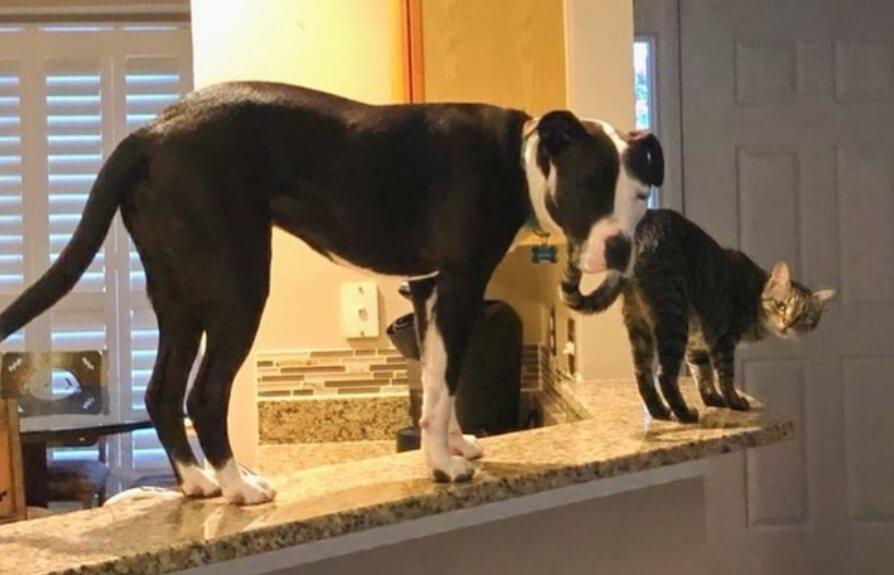Ovaj pas se ponaša poput mačke – vlasnica objasnila zašto je tako