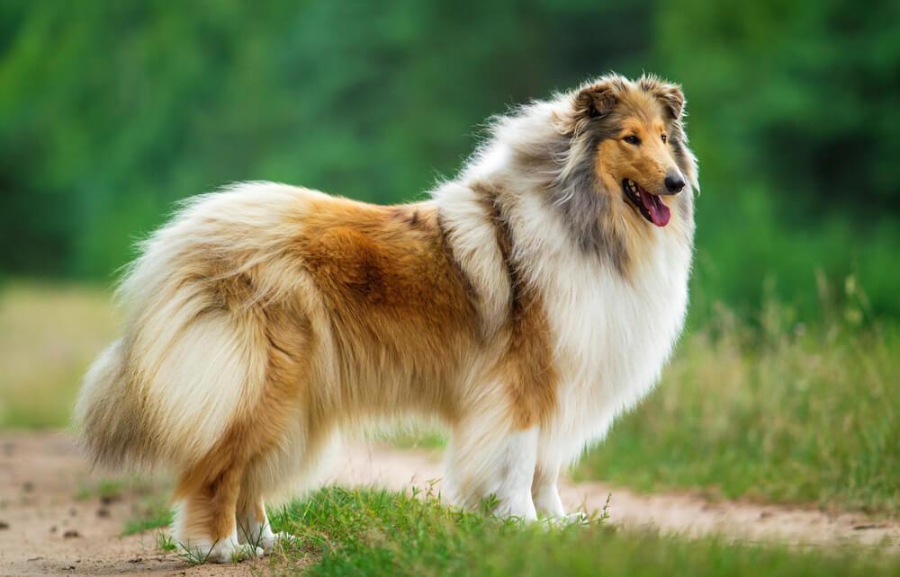 Minimalna razlika – rase pasa koje se ponašaju kao mačke
