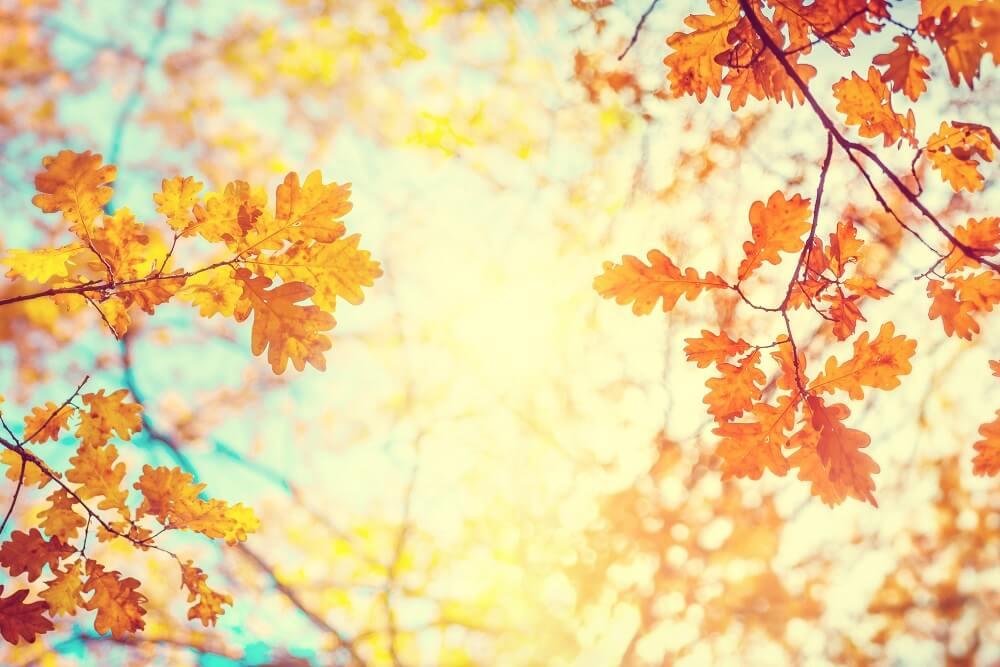 Danas počinje jesen – zanimljivosti o ovom godišnjem dobu za koje možda niste znali