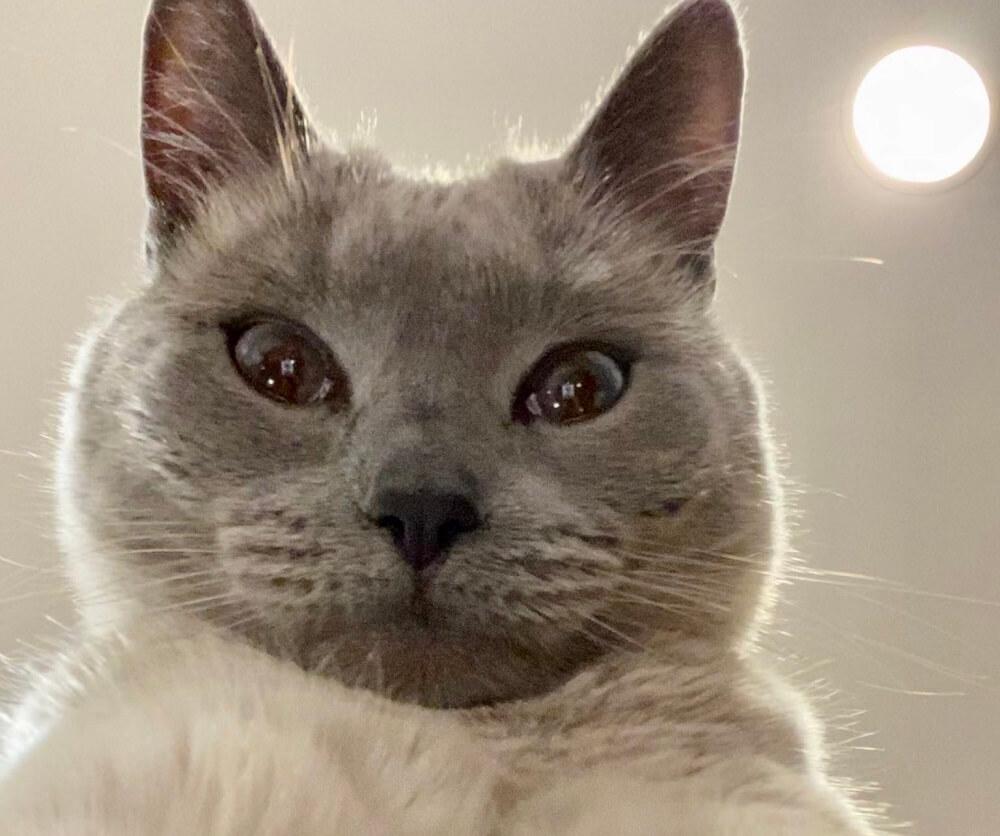 Kako izgleda kada mačka pravi selfije