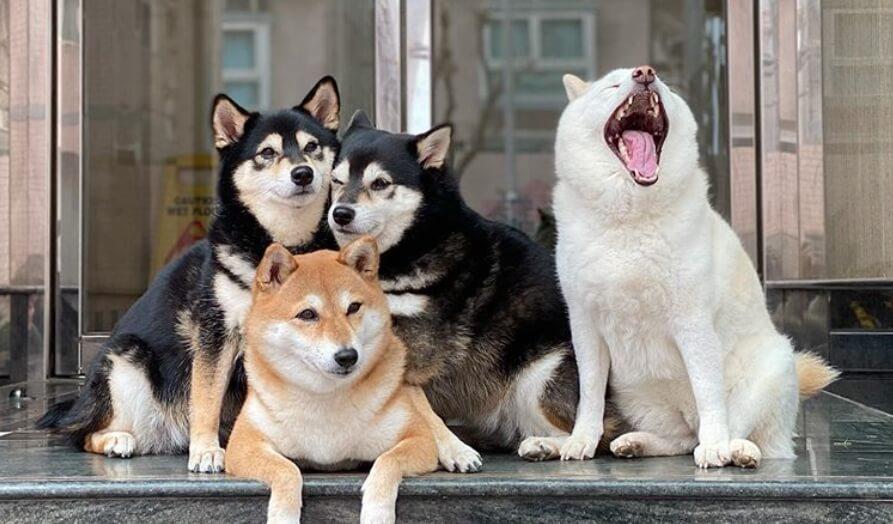 Svi imamo jednog takvog prijatelja – ovaj presladak pas upropasti svaku grupnu fotografiju