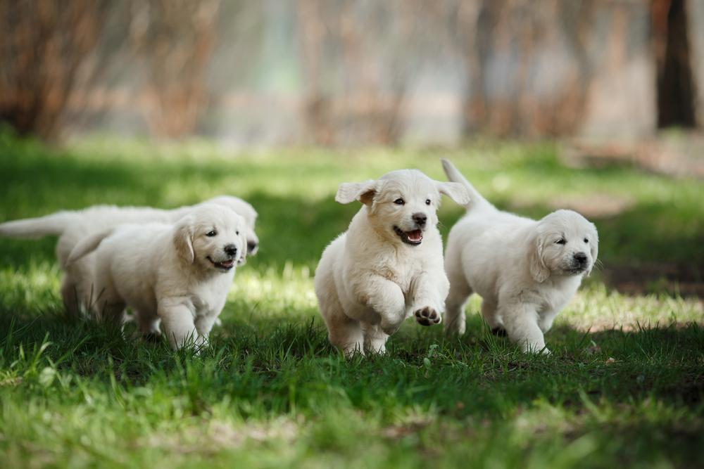 Šta sve treba da znate pre nego što usvojite psa ili mačku
