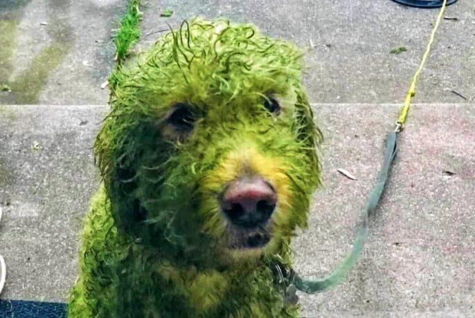 Ovaj nestašni pas je zbog svog poteza postao hit na Tviteru