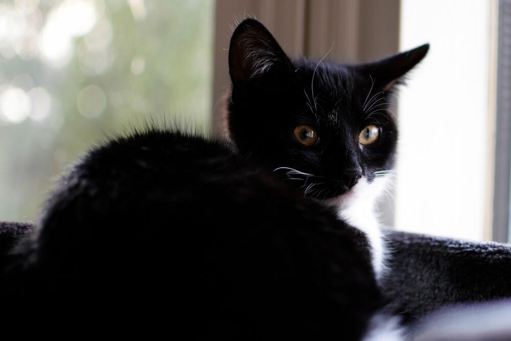 Mačka imenovana za počasnog savetnika ministarke – Zvuči suludo, ali ovo je jedna predivna priča