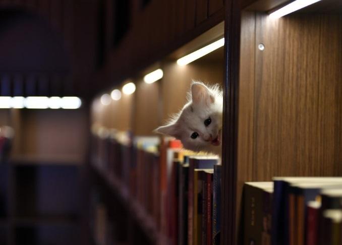 U jednoj biblioteci u Turskoj čitaoci imaju interesantno društvo