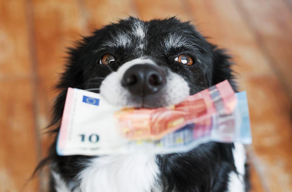 Kupujete kućnog ljubimca? Ovo su najskuplje životinje na svetu