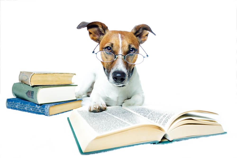 Znate li koje su najinteligentnije životinje na svetu?