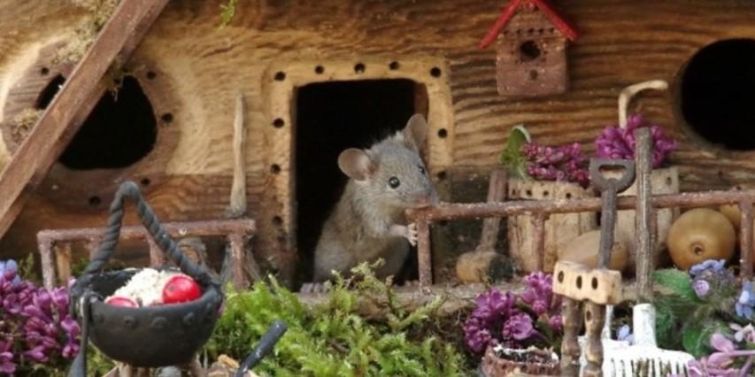 Fotograf je napravio minijaturno selo za miša, a zatim i genijalne fotke!
