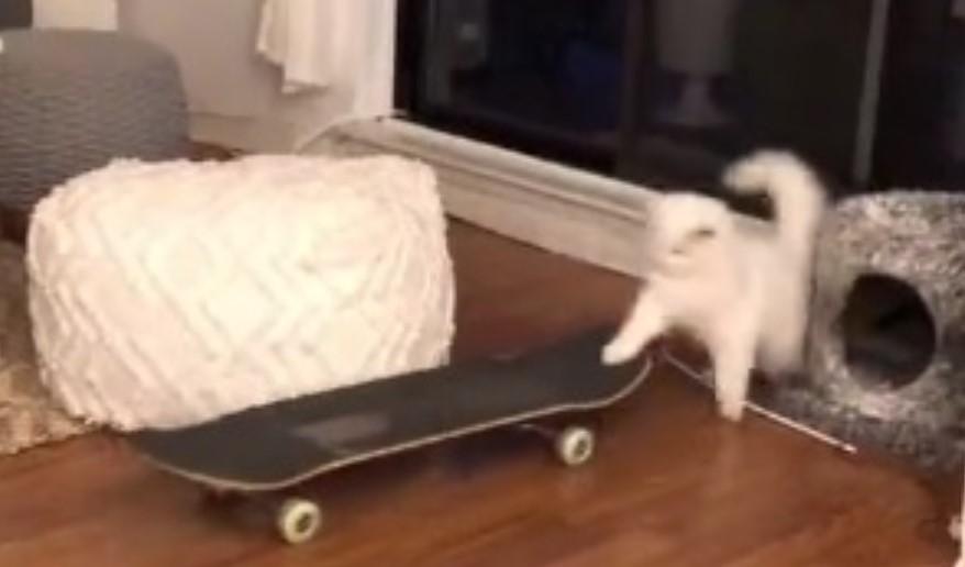 Nešto najslađe što ćete videti danas – beli mačak vozi skejtbord