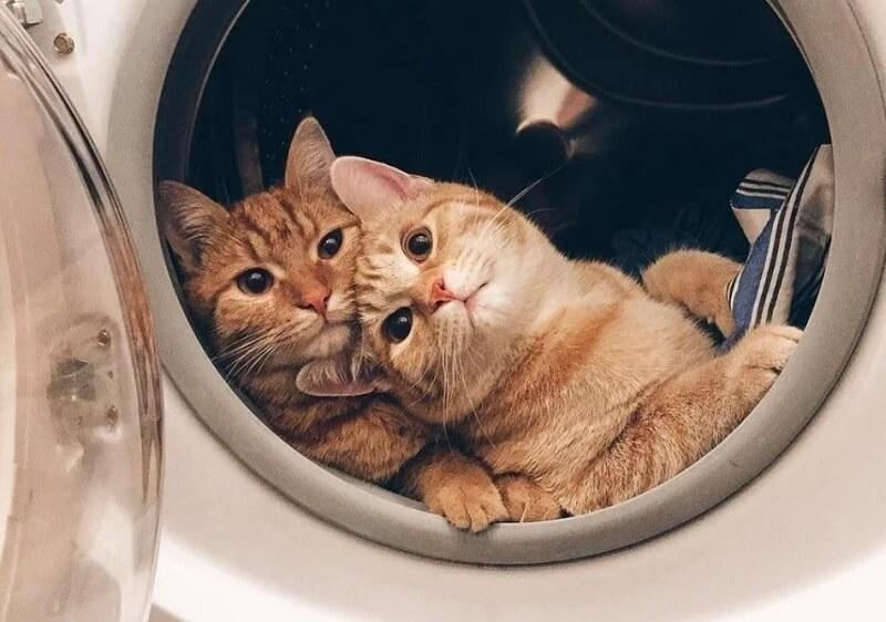 Zabava koja ne prestaje – evo zašto je zabavnije imati dve mačke od jedne