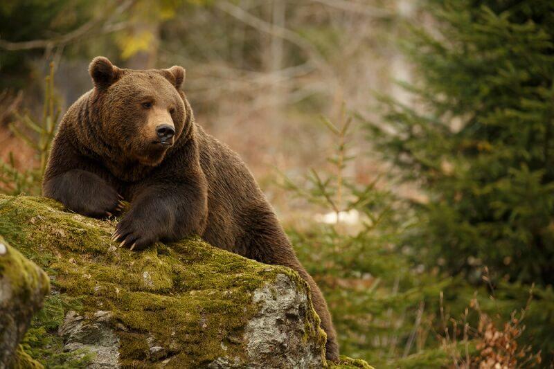 Rvanje sa medvedima, pravljenje peščanih zamkova… Ovo su najčudniji zakoni u nekim zemljama sveta